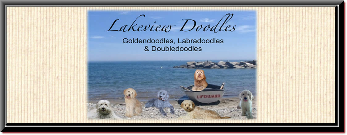 www.lakeviewdoodlse.com